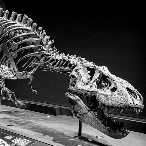 68 million years B.C.